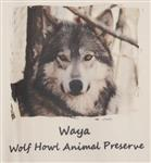 View details for this Lone Wolf Waya T Shirt - XXXL
