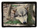 View details for this Wolf Framed Easel Magnet - Woha